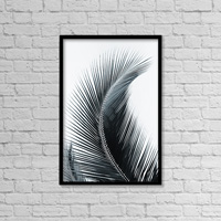 Palm frond curved upward towards sky (black and white photograph)